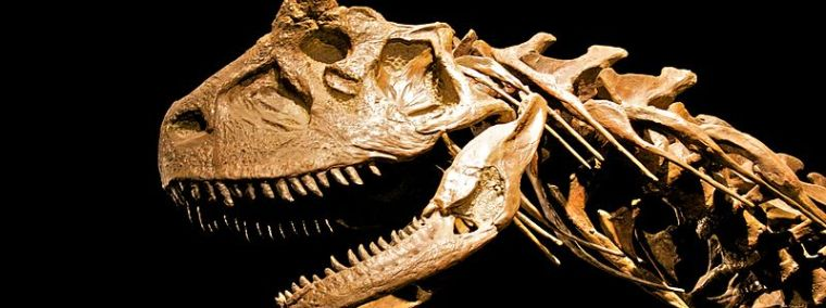 Carbon dating used determine age fossils of dinosaurs
